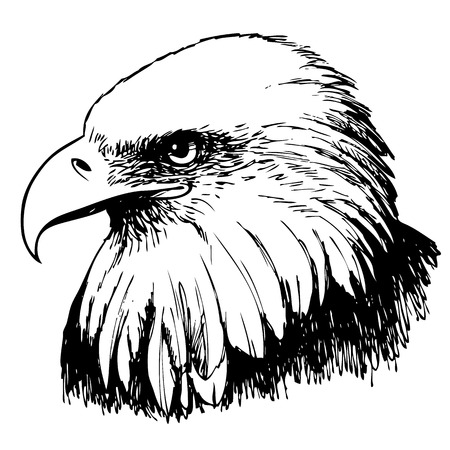 Black and white eagle hand drawn on white background