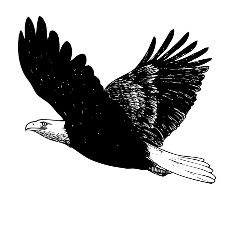 patriotic eagle: Black and white eagle hand drawn on white background