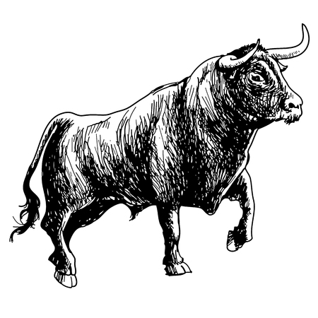 hand drawn illustration of bull on white background Ilustração
