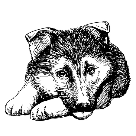 alsatian: Puppy German Shepherd hand drawn isolated on white background