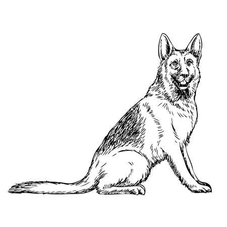 German Shepherd hand drawn isolated on white background Çizim
