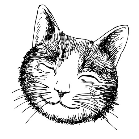 freehand sketch of smile cat head hand drawn on white background Stock fotó - 46096682