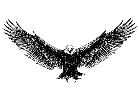 drawing large: freehand sketch of flying eagle hand drawn on white background