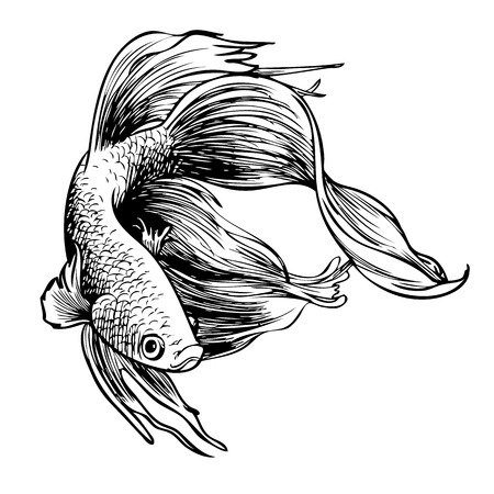 freehand sketch illustration of Betta splendens, Siamese fighting fish doodle hand drawn