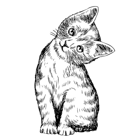 animal pussy: freehand sketch illustration of cat, kitten doodle hand drawn