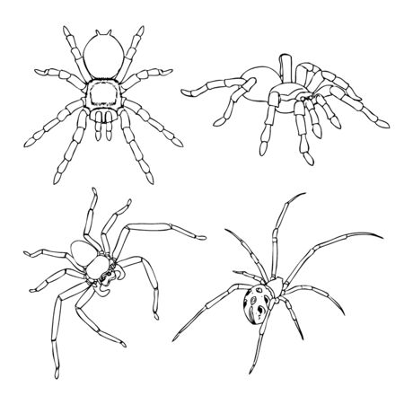 freehand sketch illustration, set of spider outline, doodle hand drawn