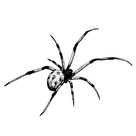gossamer: freehand sketch illustration of spider, doodle hand drawn