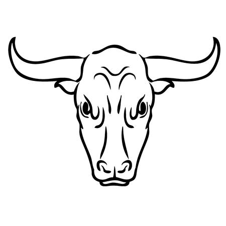 bullish: Freehand illustration of bull on white background, doodle hand drawn Illustration