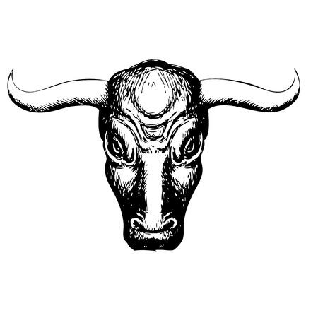 toro: Ilustración a mano alzada de toro en el fondo blanco, dibujado mano del doodle