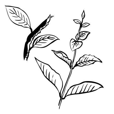 グランジ ツリーの葉と白い背景、落書き手描きの支店のフリーハンドの図