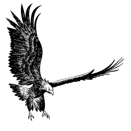 freehand sketch illustration of flying, fighting eagle hand drawn on white background