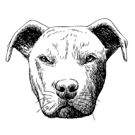 uit de vrije hand schets illustratie van de pitbull hond, getrokken doodle de hand Stock Illustratie