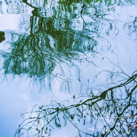 distort: reflection of tree branch on the surface of water, use as abstract background Stock Photo