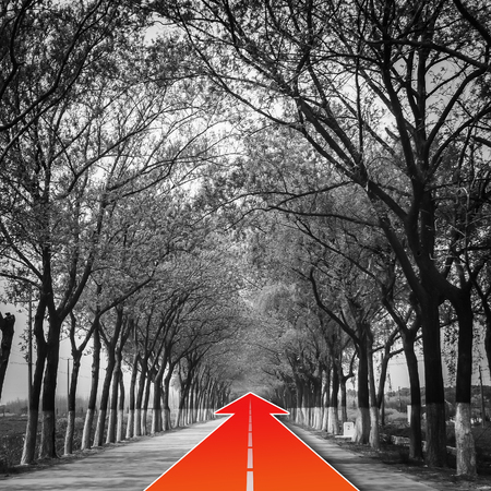 continuously: tree natural tunnel on concrete road with red arrow, concept of keep go forward for success Stock Photo