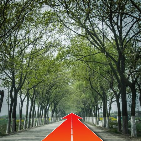go ahead: tree natural tunnel on concrete road with red arrow, concept of keep go forward for success Stock Photo