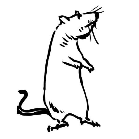 rata: ilustración boceto a mano alzada de rata, ratón dibujado mano del doodle