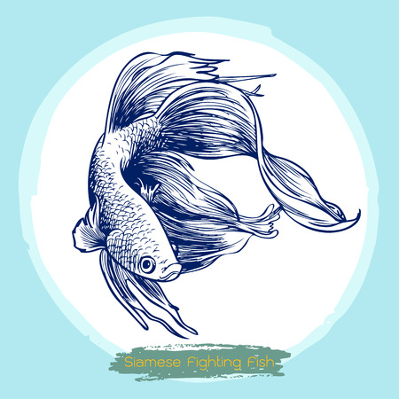 siamese: illustration of Betta splendens, Siamese fighting fish doodle