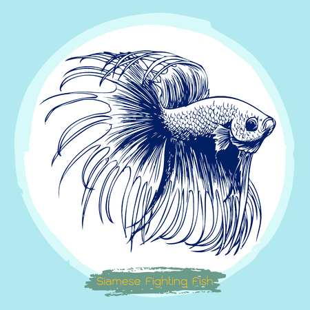 fighting: illustration of Betta splendens, Siamese fighting fish doodle