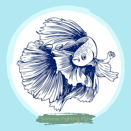 siamese fighting fish: illustration of Betta splendens, Siamese fighting fish doodle