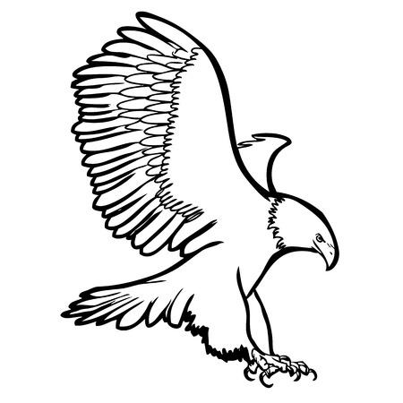 illustration of eagle, hawk bird doodle