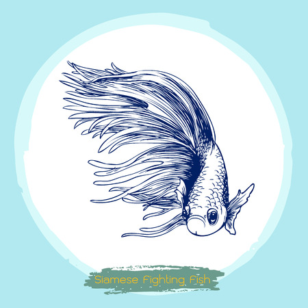 illustration of Betta splendens, Siamese fighting fish doodle