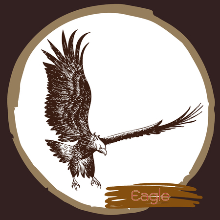 illustration of eagle, hawk bird doodle