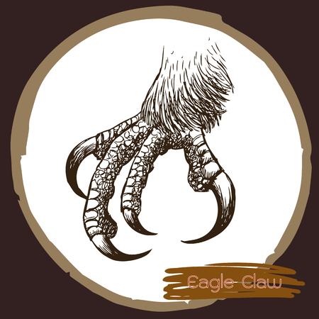freehand sketch illustration of eagle claw, hawk bird doodle hand drawn