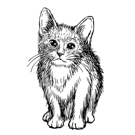 sketch illustration of little cat, kitten doodle