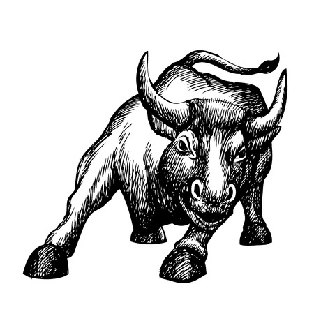 charging bull: sketch illustration of charging bull,  doodle Illustration