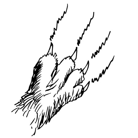 cat s: freehand sketch illustration of cat claw doodle hand drawn