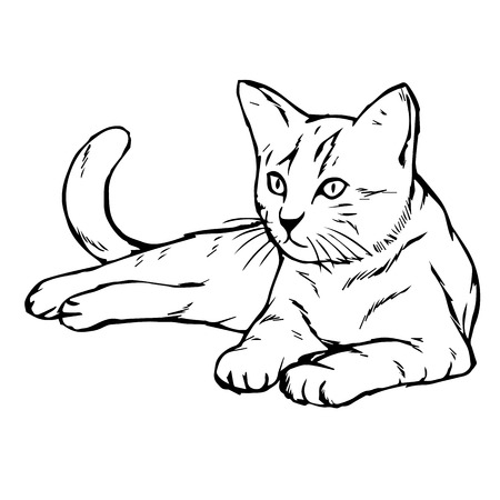 freehand sketch illustration of cat, kitten doodle hand drawn