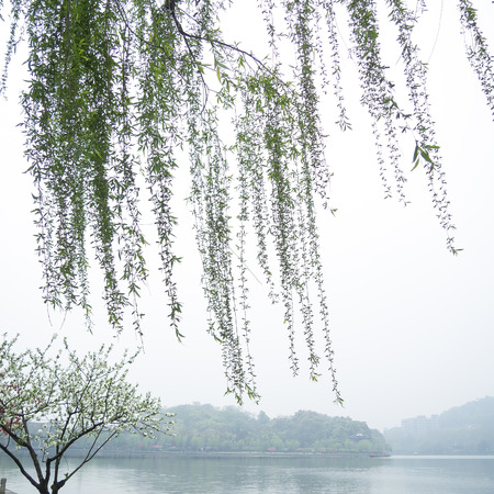 weeping: Chinese willow tree in the mist by the Xi Hu lake Stock Photo