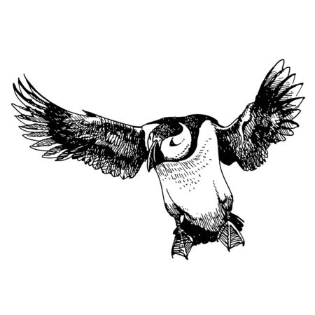 Freehand sketch illustration of flying Puffin bird doodle hand drawn Stock Illustratie