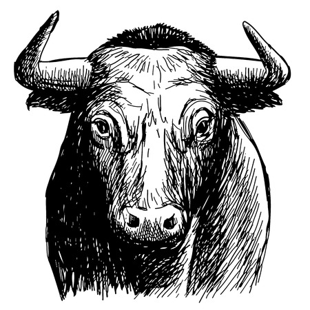 Freehand sketch illustration of bull,  doodle hand drawn.