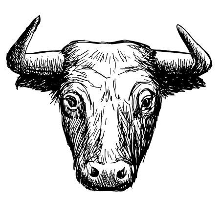 Freehand sketch illustration of bull head,  doodle hand drawn.