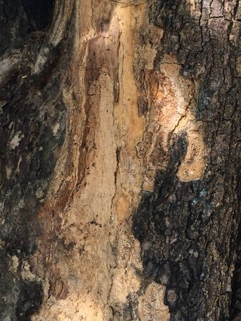 It is a wonderful bark of big old tree.