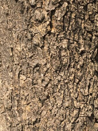 It is a wonderful bark of big old tree used for abstract or texture background.