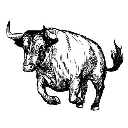 Hand drawn illustration of bull on white background Illustration
