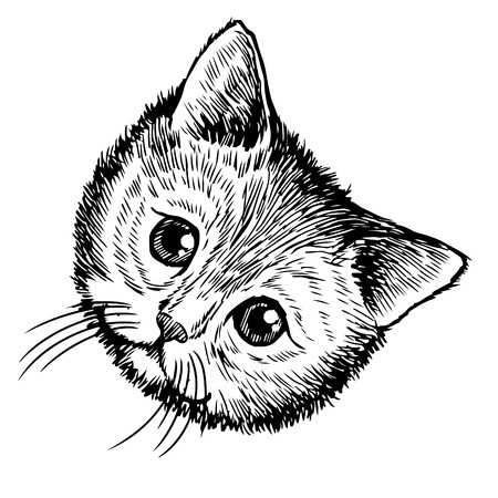 freehand sketch illustration of little cat, kitten, doodle hand drawn