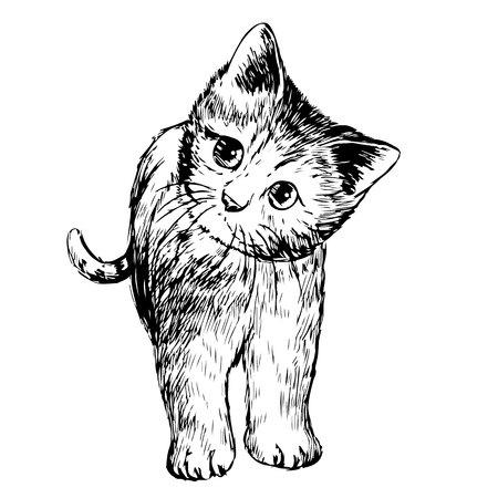 freehand sketch illustration of little cat, kitten, doodle hand drawn Vettoriali