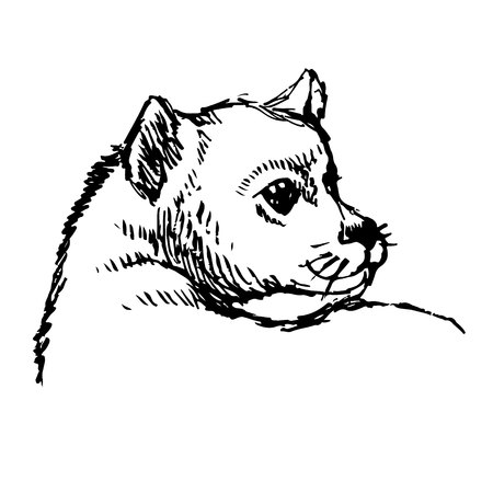 Little dog hand drawn isolated on white background Illustration