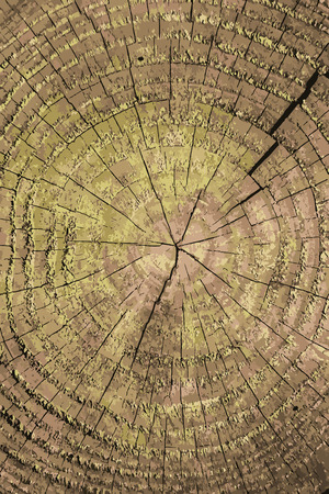 Detail of annual rings of a tree trunk in the forest Ilustração
