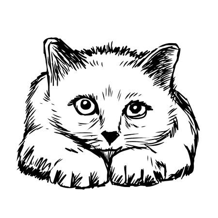 Little cat hand drawn isolated on white background Ilustração