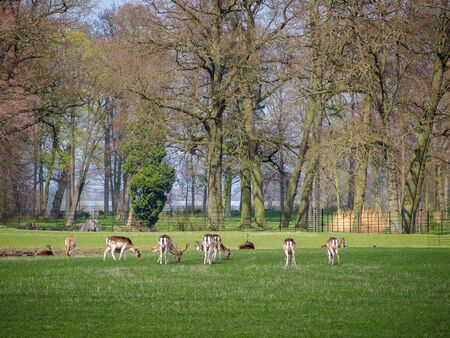 Many deers in the park of Kasteel De Haar, The Natherlands Stockfoto