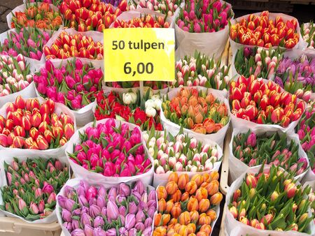 Tulips for sell, Detail of Amsterdam flowers market: the best tulips of the world Stockfoto