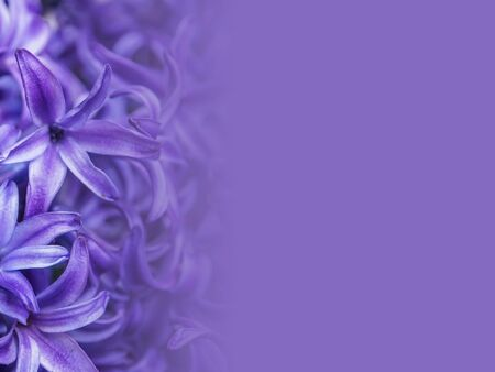 purple hyacinth flower made as abstract flower background illustration. Stok Fotoğraf