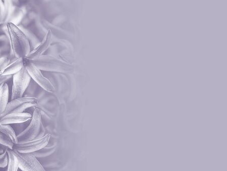 purple hyacinth flower made as abstract flower background illustration. Stockfoto - 135486238