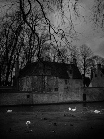 Black and white. image of swans in the city center. Brugge medieval historic city. Brugge streets and historic center, canals and buildings. Brugge popular touristic destination of Belgium.