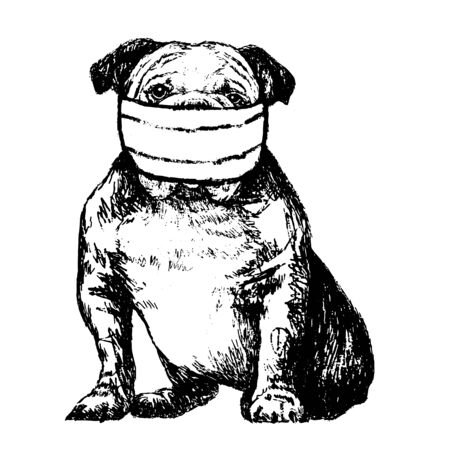 freehand sketch illustration of Bulldog with mask doodle hand drawn