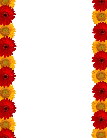 Gerberas and Sunflower background.  photo